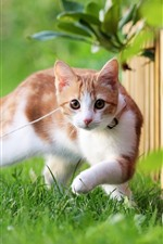 Preview iPhone wallpaper Kitten, pet, rope, grass, green, fence