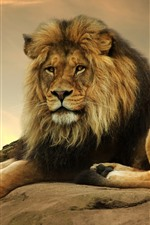 Preview iPhone wallpaper Lion, rest, look, tail, stone