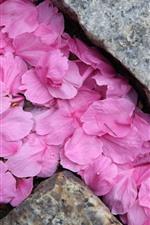 Preview iPhone wallpaper Many pink sakura petals, stones