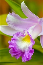 Preview iPhone wallpaper Orchid close-up, pink flower, petals