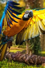 Preview iPhone wallpaper Parrot, macaw, flight, wings, bird
