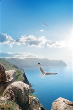 Preview iPhone wallpaper Russia, Crimea, seagull, birds, sea, sky, sunshine