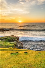 Preview iPhone wallpaper Sea, coast, green meadow, seagull, sunrise