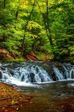 Árvores, Floresta, Cachoeira, Verde, Creek