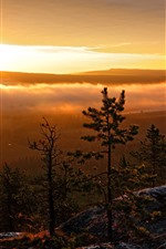Preview iPhone wallpaper Trees, mountain top, sunrise, morning, fog