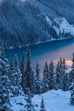 Preview iPhone wallpaper Banff National Park, winter, trees, snow, Peyto Lake, Canada