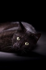 Preview iPhone wallpaper Black cat, rest, yellow eyes, look