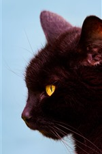 Preview iPhone wallpaper Black cat, side view, head, yellow eyes, ears