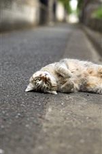 Preview iPhone wallpaper Cat lying on road