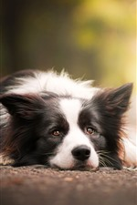 Preview iPhone wallpaper Dog rest, ground, look