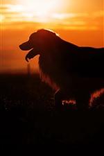 犬、シルエット、夕日
