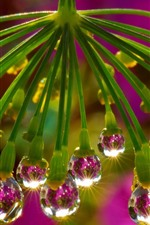 Preview iPhone wallpaper Flower, water droplets, glare