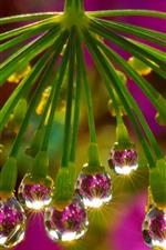 Flor, gotículas de água, brilho