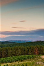 Floresta, árvores, nuvens, céu, paisagem da natureza