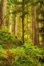 Forest, trees, jungle, green grass