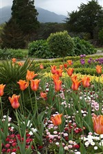 Jardim, tulipas, flores, árvores
