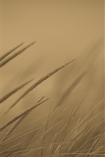 Preview iPhone wallpaper Grass, hazy background, dusk