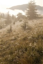 Preview iPhone wallpaper Grass, trees, fog, morning, sunshine, nature scenery