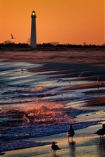 Preview iPhone wallpaper Lighthouse, birds, sea, sunset