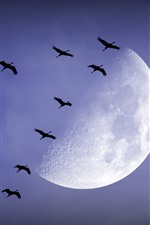Preview iPhone wallpaper Moon, birds, night