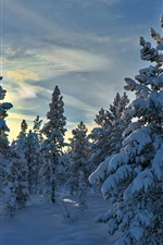 Preview iPhone wallpaper Norway, Hedmark County, trees, snow, sun rays, winter