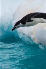 iPhone обои Пингвин, прыжок, флос, лед, море