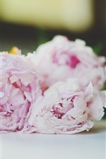 Preview iPhone wallpaper Pink peonies, flowers, bouquet, hazy