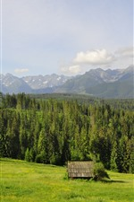 Poland, Tatry, houses, mountains, trees, grass