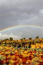 Preview iPhone wallpaper Rainbow, bushes, nature