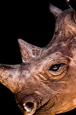 Preview iPhone wallpaper Rhino, head, horn, eye, black background