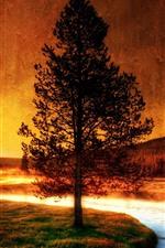 Rio, árvore, grama, nascer do sol, silhueta, manhã