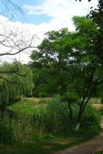 iPhone обои Лето, деревья, ивы, река, дорога