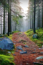Preview iPhone wallpaper Trees, forest, fog, stones, path