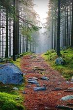 Árvores, floresta, nevoeiro, pedras, caminho