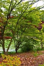 Árvores, grama, lagoa, folhas, primavera
