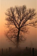 Árvores, estrada, cerca, nascer do sol, nevoeiro, amanhecer