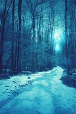 Árvores, neve, caminho, escuridão, crepúsculo