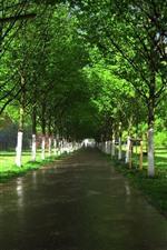 Árvores, estrada molhada, verde, sol, jardim