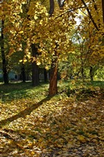 Preview iPhone wallpaper Ukraine, trees, yellow leaves, autumn