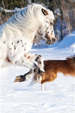 Preview iPhone wallpaper White horse and dog, running, snow, winter