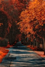 Preview iPhone wallpaper Autumn, trees, road, red leaves, grass