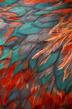 Preview iPhone wallpaper Bird feathers, red and blue, texture