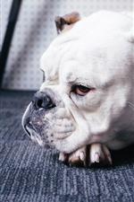 Preview iPhone wallpaper Bulldog, dog, rest, floor