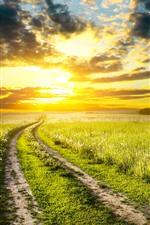 Fields, flowers, road, sunset, sky, clouds