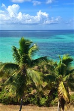 Preview iPhone wallpaper Florida, palm trees, coast, blue sea, sky, clouds, USA