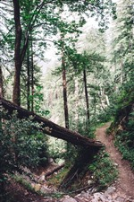 Preview iPhone wallpaper Forest, trail, trees, rocks