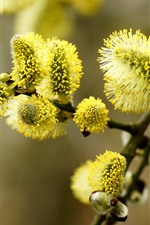 iPhone壁紙のプレビュー グリーンウィローの芽、小枝、春