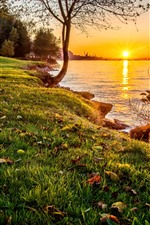 Natureza, grama, árvores, lago, pôr do sol