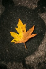 Preview iPhone wallpaper One yellow maple leaf, stone
