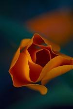 Preview iPhone wallpaper Orange flower macro photography, petals, leaf, hazy background